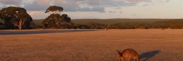 Kangaroo Island Conservation